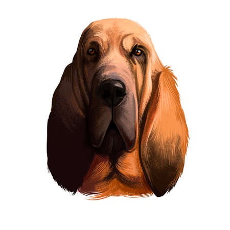 Chien de Saint-Hubert, Bloodhound, St. Hubert Hound dog digital art illustration isolated on white background. Norwegian origin hunting dog. Cute pet hand drawn portrait. Graphic clip art design Banco de Imagens - 131779255