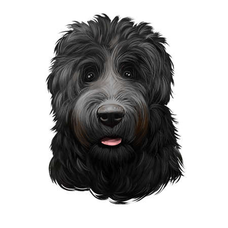 Tchiorny Terrier, BRT Black Russian Terrier, dog digital art illustration isolated on white background. Russian origin working guardian dog. Cute pet hand drawn portrait. Graphic clip art design Banco de Imagens
