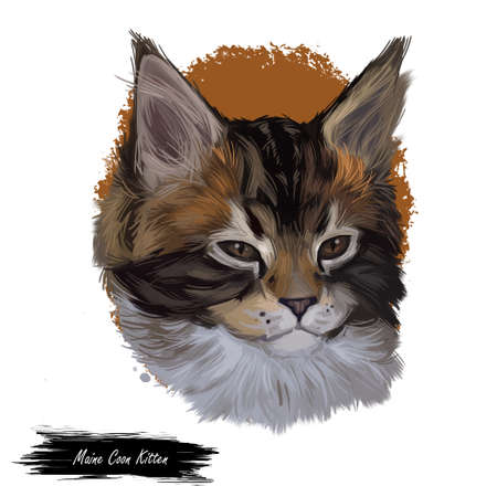 Maine coon kitten watercolor portrait of small cat digital art illustration. Realistic drawing of kitty with long and furry coat and ears. Maine shag face in closeup. American longhair breed of feline