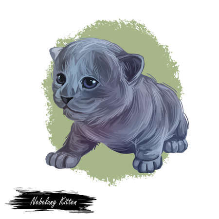 Nebelung kitten digital art illustration. Longhaired Russian Blue watercolor portrait in realistic manner. Grey haired kitten face and body drawing. Domesticated pet, feline originated from US. 写真素材 - 132308483