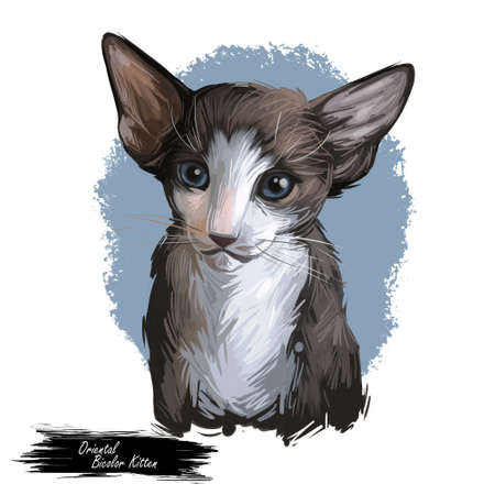 Oriental Bicolor kitten digital art illustration. Watercolor portrait of kitty from USA. Playful american feline breed with triangle head, long body and ears. Domestic per face in closeup with text 写真素材