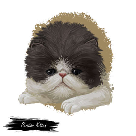 Persian kitten with fluffy fur, digital art illustration. Persian longhair watercolor portrait in closeup. Feline breed of Shirazi or Iranian cat originated from Iran. Domesticated pet drawing