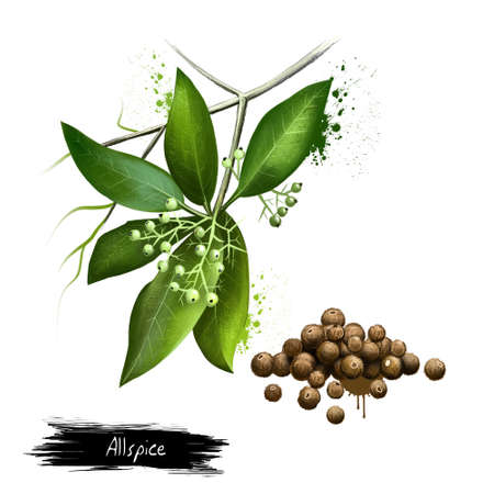 Pile of aromatic allspice isolated on white background. Jamaica pepper, pepper, myrtle pepper, pimenta, Turkish Yenibahar, or newspice. Dried unripe fruit berries, used as a spice. Digital art image Banco de Imagens