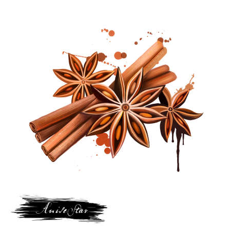 Anise star and vanilla sticks illustration isolated on white background. Hand drawn sketch. Series of ingredients for cooking. Herb spices. Aromatherapy. Natural cosmetics. Close Up star anise seeds. 스톡 콘텐츠