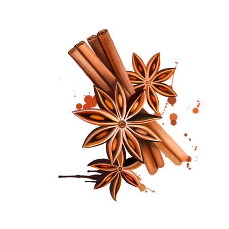 Anise star and vanilla sticks illustration isolated on white background. Hand drawn sketch. Series of ingredients for cooking. Herb spices. Aromatherapy. Natural cosmetics. Close Up star anise seeds. Stock Photo