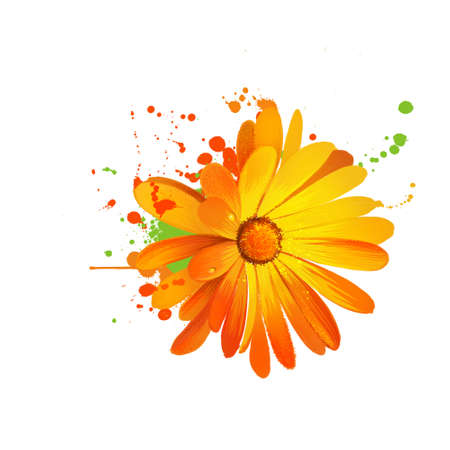 Calendula illustration. Daisy family Asteraceae. Marigolds. Genus name Calendula is diminutive of calendae. Calendula officinalis. Popular herbal and cosmetic products. Herbs and spices. Digital art