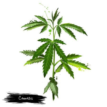 Cannabis isolated on white. Marijuana leaf. Medical marijuana. Cannabis has long been used for hemp fibre, for hemp oils, for medicinal purposes, and as a recreational drug. Digital art illustration