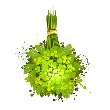 Lovage illustration. Levisticum officinale. Medicinal herb, flowers with leaves. Tall perennial plant, species in the genus Levisticum in the family Apiaceae, subfamily Apioideae. Digital art