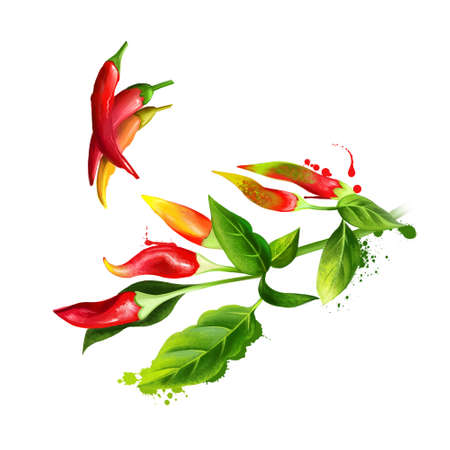 Cayenne pepper, Guinea spice, cow-horn pepper, red hot chili pepper, aleva, bird pepper, red pepper, is a cultivar of Capsicum annuum related to bell peppers, paprika. Herbs collection. Digital art Zdjęcie Seryjne