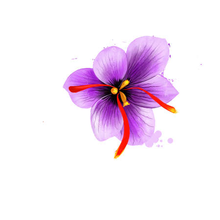 Flower crocus and dried saffron spice isolated on white background. Saffron crocus. Labels for Essential Oils and Natural Supplements. Styles and stigmata, called threads collected. Digital art image