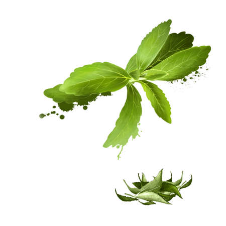 Stevia leaves fresh and dried. Sweetener and sugar substitute extracted from the leaves of the plant species Stevia rebaudiana. Labels for Essential Oils and Natural Supplements. Digital art image