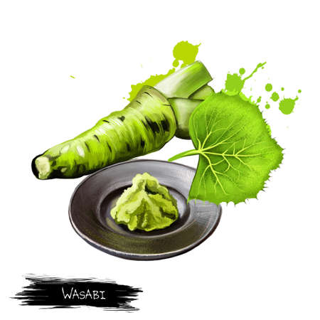 Fresh wasabi root, raw wasabi for japanese food. Japanese horseradish, condiment for sushi, sashimi on the plate isolate on white. Strong pungency. Herbs and spices collection. Digital art.