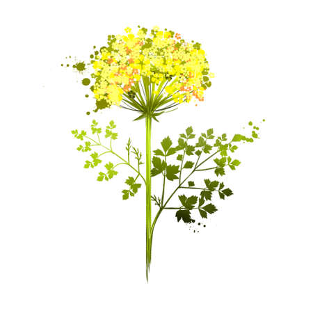 Lovage is erect, herbaceous, tall perennial plant Levisticum officinale. Medical plant. The stems and leaves are shiny glabrous green to yellow-green. Herbs and spices collection. Digital art Imagens