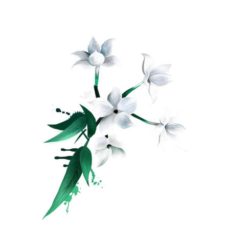 Jasmine Flower isolated on white. Deciduous or evergreen green all year round, and can be erect, spreading, or climbing shrubs and vines. Medical plant. Herbs and spices collection. Digital art