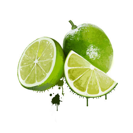 Fresh lime and slice isolated on white background. Hybrid citrus fruit, acidic juice vesicles. Key lime, persian lime, kaffir lime, and desert lime. Limes are an excellent source of vitamin C. Digital art Stock Photo