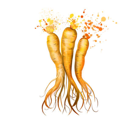 Ginseng isolated. Ginseng slow-growing perennial plants with fleshy roots, belonging to the genus Panax of the family Araliaceae. Herbs spices. Healthy food natural organic plant. Digital art Banco de Imagens