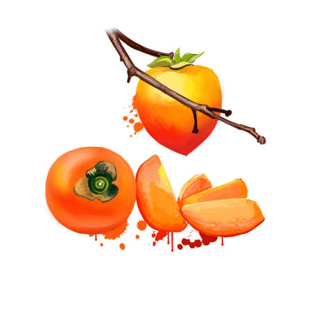 Date plum tree with fruit slices isolated on white. Diospyros lotus, date-plum, Caucasian persimmon, or lilac persimmon. Small fruit, which have taste reminiscent of both plums and dates. Digital art
