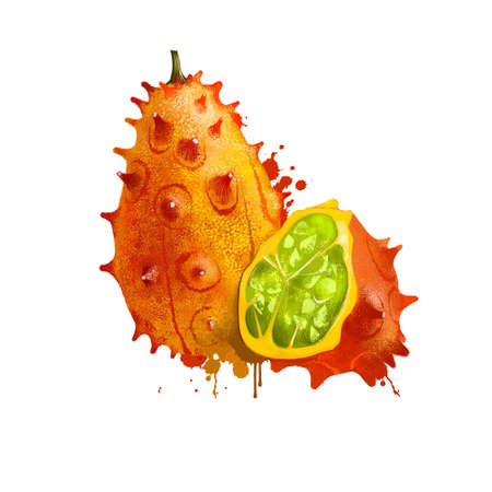 Horned melon fruit isolated on white background. kiwano or Cucumis metuliferus tropical blowfish fruit, Cucurbitaceae family. Fresh fruit colorful drawing with paint splashes and drips. Digital art