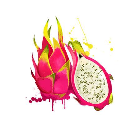 Pitaya fruit isolated on white background. Ripe pitahaya ,dragon fruit, genus Hylocereus. Indonesian name buah naga. Fresh tropical fruit colorful drawing with paint splashes and drips. Digital art 版權商用圖片