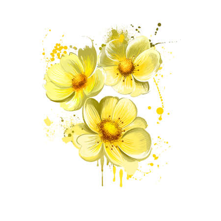 Yellow rose isolated on white. Floral background. Romantic wallpapers. Wallpaper design. Family Rosaceae. Elegantsummer flower. Fashionable plant. Greeting card design. Postcard illustration