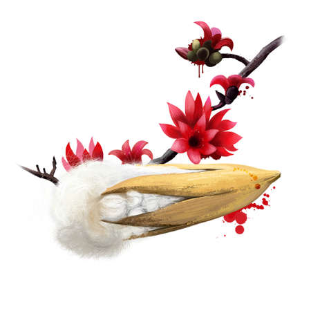 Kapok tree isolated on white. Ceiba pentandra or Fromager or Kapok Tree, showing flowers. Asian tree with red flowers. Fruits of the world collection. Digital art illustration
