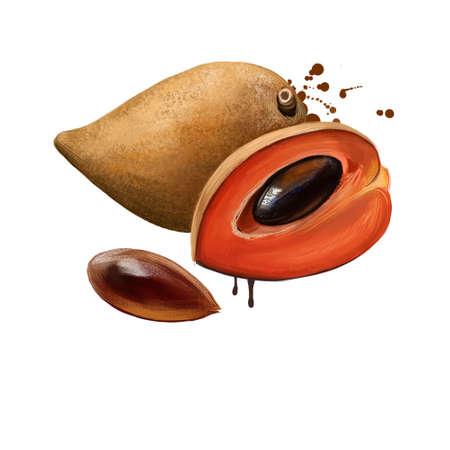 Mamey sapote, pouteria sapota, mamey sapote isolated on white. Mamey colorado, zapote colorado zapote rojo. Reddish colour of flesh. Yellow mamey. Fruits of world collection. Digital art illustration