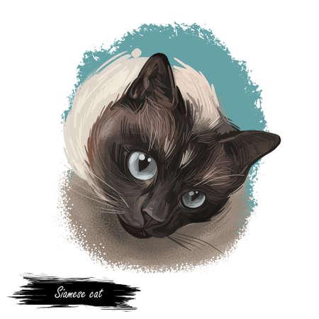 Siamese cat lilac point oriental Wichianmat landrace, cat native to Thailand known as Siam. Digital art illustration of pussy kitten portrait, feline food cover. Fluffy domestic pet, t-shirt print