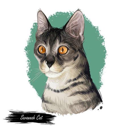 Savannah Cat hybrid cat breed, cross between serval and domestic cat. Digital art illustration of pussy kitten portrait, feline food cover, veterinary clinic label. Fluffy domestic pet, t-shirt print
