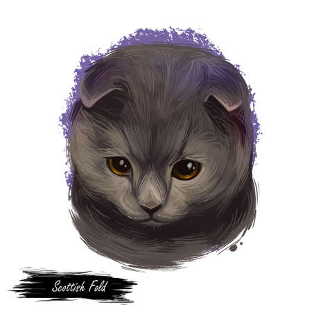 Scottish Fold breed of domestic cat with natural dominant-gene mutation. Lop-eared or lops, longhaired called Highland Longhair Fold and Coupari. Digital art illustration, clipart graphic kitten 写真素材
