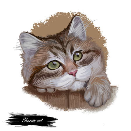 Siberian cat landrace variety of domestic cat, present in Russia. Siberian Forest Cat, Moscow Semi-longhair, Neva Masquerade. Digital art illustration of pussy kitten portrait feline food cover design Stockfoto
