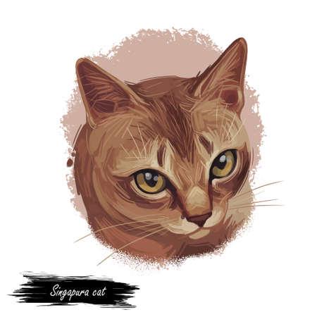 Raw and Pedigreed Singapura, Drain Kucinta Love cat. Digital art illustration of pussy kitten portrait, feline food cover design, veterinary vet clinic label. Fluffy domestic pet, t-shirt print