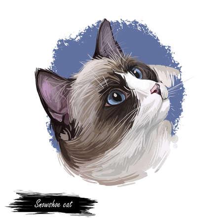 Snowshoe cat breed of cat originating in United States. Digital art illustration of pussy kitten portrait, feline food cover design, veterinary vet clinic label. Fluffy domestic pet, t-shirt print