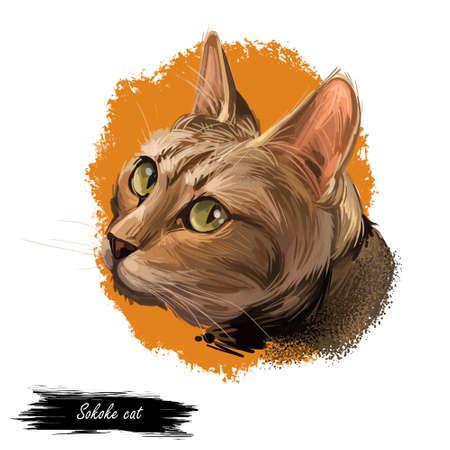 Sokoke cat or Sokoke Forest Cat, African Shorthair natural breed of domestic cat, feral khadzonzo landrace. Digital art illustration pussy kitten portrait, feline. Fluffy domestic pet, t-shirt print