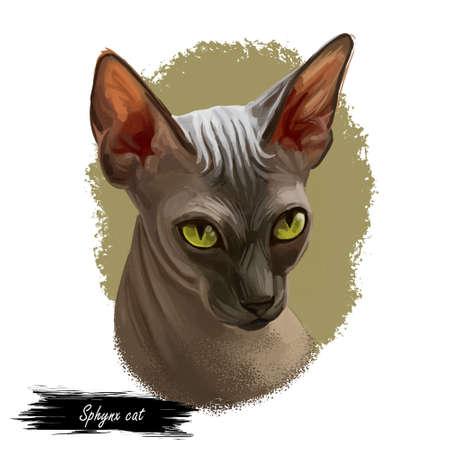 Sphynx cat breed known for lack of coat fur isolated. Digital art illustration of pussy kitten portrait, feline food cover design, veterinary vet clinic label. Fluffy domestic pet, t-shirt print