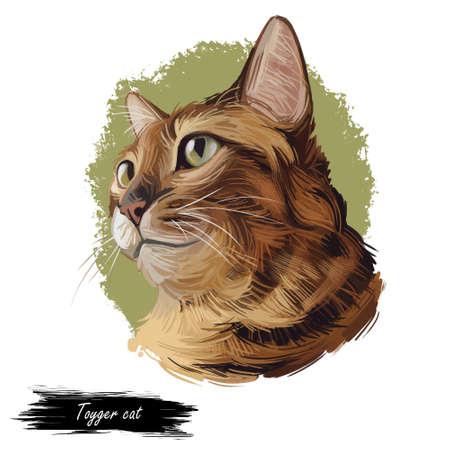 Toyger breed of domestic cat isolated on white. Digital art illustration of pussy kitten portrait, feline food cover design, veterinary vet clinic label. Fluffy domestic pet, t-shirt print