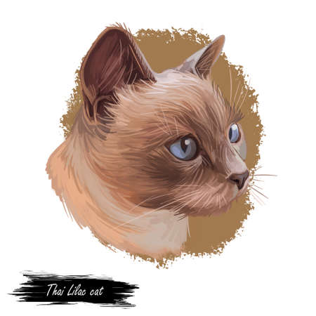 Thai Lilac cat or Korat, Si sawat, Malet isolated on white. Digital art illustration of pussy kitten portrait, feline food cover design, veterinary vet clinic label. Fluffy domestic pet, t-shirt print