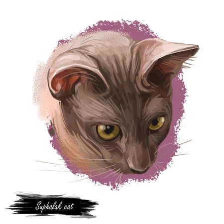 Suphalak, Thong Daeng cat isolated on white. Thong Daeng. Digital art illustration of pussy kitten portrait, feline food cover design, veterinary vet clinic label. Fluffy domestic pet, t-shirt print Stockfoto