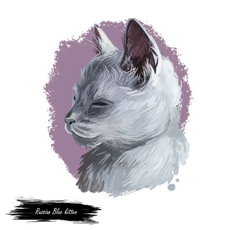 Russian Blue kitten breed of light shimmering silver to a darker slate grey color. Archangel Blue, Archangel Cat. Digital art illustration of pussy cat portrait, fluffy domestic pet, t-shirt print Stockfoto