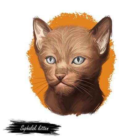 Suphalak, Thong Daeng kitten isolated on white. Thong Daeng. Digital art illustration of pussy cat portrait, feline food cover design, veterinary vet clinic label. Fluffy domestic pet, t-shirt print