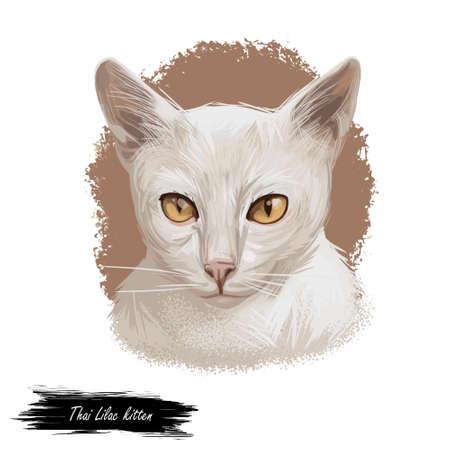 Thai Lilac kitten or Korat, Si sawat, Malet isolated on white. Digital art illustration of pussy cat portrait, feline food cover design, veterinary vet clinic label. Fluffy domestic pet, t-shirt print Stockfoto