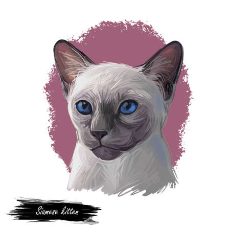 Siamese kitten lilac point oriental Wichianmat landrace, cat native to Thailand known as Siam. Digital art illustration of pussy cat portrait, feline food cover. Fluffy domestic pet, t-shirt print