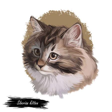 Siberian kitten landrace variety of domestic cat, present in Russia. Siberian Forest Cat, Moscow Semi-longhair, Neva Masquerade. Digital art illustration of pussy cat portrait feline food cover design