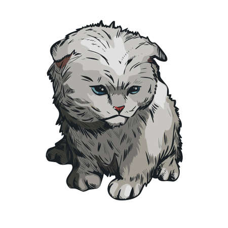 Hand drawn grey cat isolated feline animal sketch. Vector portrait of fluffy kitten, food cover design. Vector veterinary clinic label, home put fluffy cat on white, domestic home purebred animal.  イラスト・ベクター素材