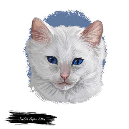 Turkish Angora kitten breed of domestic cat. White white Turkish Angora cat isolated domestic animal. Digital art illustration pussy kitten portrait fluffy domestic pet t-shirt print hand drawn tabby Stockfoto