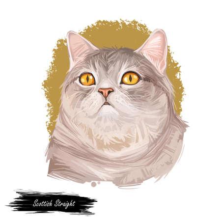 Scottish straight cat breed. Highland cat, Scottish Straight Longhair, semi-long-haired kitten hand drawn isolated. Digital art illustration pussy kitten portrait, fluffy domestic pet t-shirt print