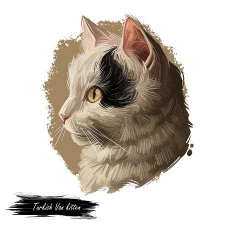 Turkish Van cat landrace of domestic cat isolated animal. Digital art illustration pussy kitten portrait, fluffy domestic pet t-shirt print hand drawn tabby, swimming cat white kitten with blue eyes.