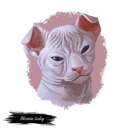 Ukrainian Levkoy kitten cat breed of distinct appearance, inward-folding ears and little to no hair. Digital art illustration pussy kitten portrait, fluffy domestic pet t-shirt print hand drawn tabby.
