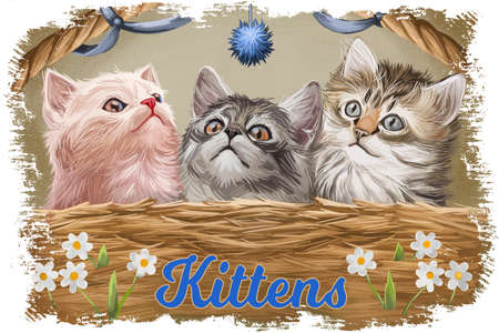 Fluffy kittens in wicker basket with spring daffodil flowers. Pussy cats angora and ragdoll kitten, siberian cat and blue toy for pets. Greeting card design, postcard with lovely felins, cover.
