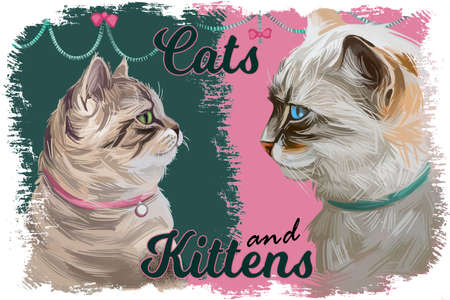 Ragdoll cat and kitten baby and adult felines digital art profile portraits. Mekong bobtail, birman or sacred cat of burma, colorpoint persian tabby, grown up pussycats hand drawn animal illustration