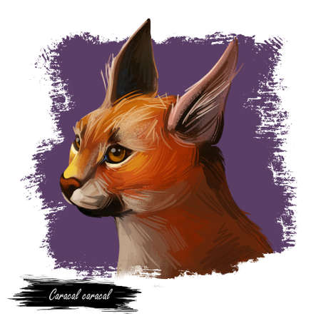 Caracal wild cat isolated digital art illustration. Medium-sized wild cat from Africa, Middle East, Central Asia and India. Caracal caracal with tufted ears. Hunting season, wildlife feline portrait. Stock Illustration - 134257707